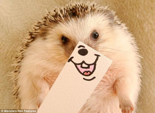Hedgehog, you are so funny, sweet, and adventurous, you made me smile today!