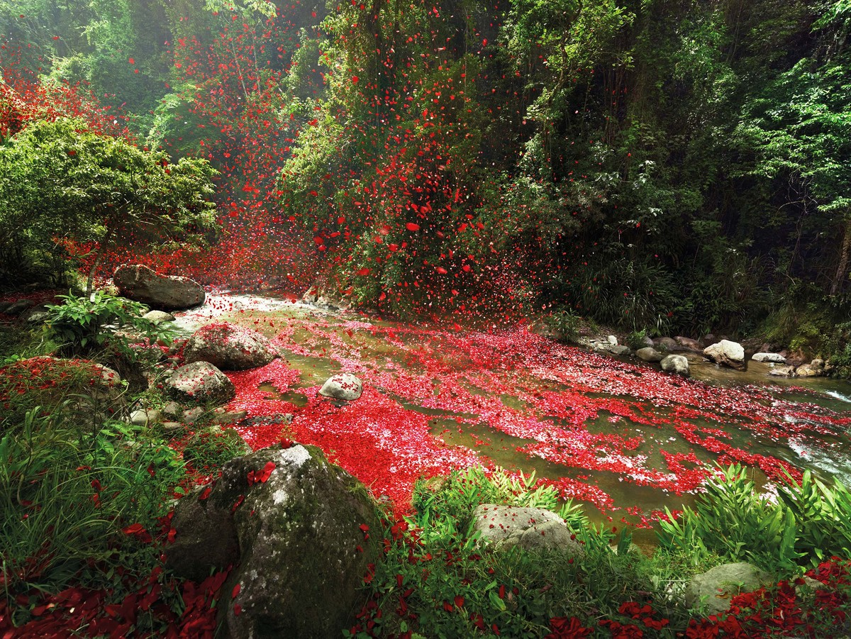 Flower petals rain down after eruption.