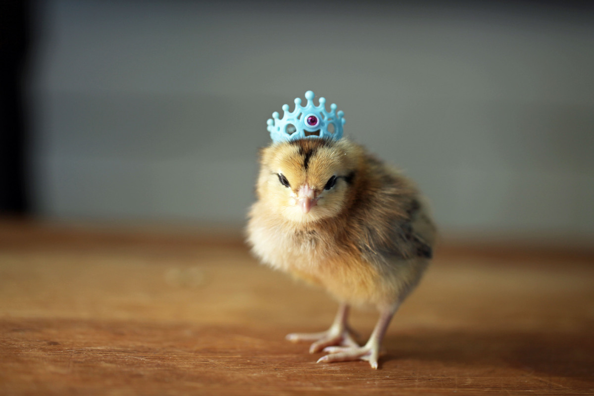 Princess Chick