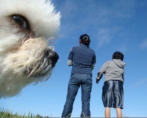Dog-timer