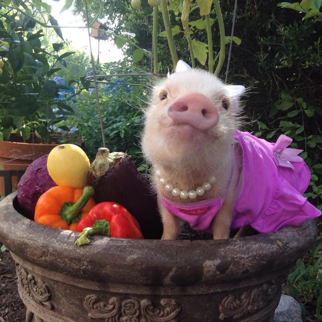 piggy-10.jpg