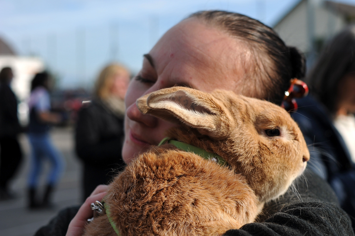 rabbit hugs animal animals hugging human humans friends hug hopping championships european aww woman switzerland wollerau fuzzy feel inside these