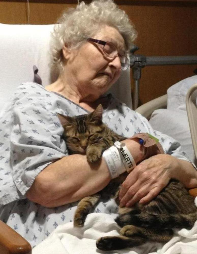 Elderly Woman Cat Hug