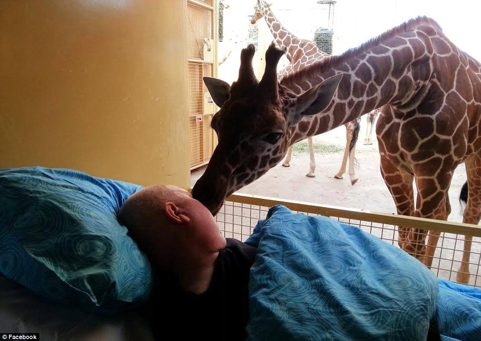Giraffe gives dying man a good-bye kiss