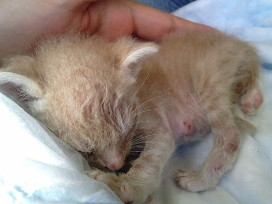 Dying Kitten Rescued From Living in A Cactus - Wow!