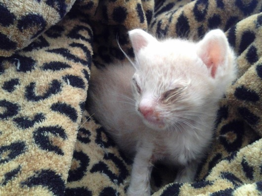 Dying Kitten Rescued From Living In A Cactus Wow