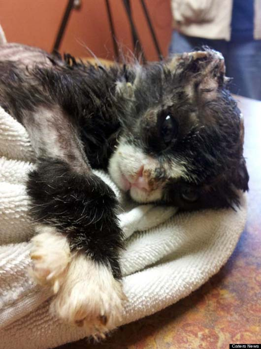 Cruelly Abused & Burned Cat Miraculously Recovers - You Have