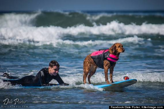 Surfing Dog Helps Terminally Ill Teen Reach His Dreams