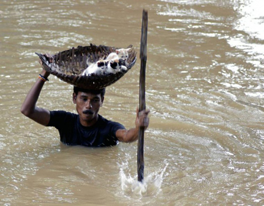 Humanity- Man carrying kittens to safety in flood