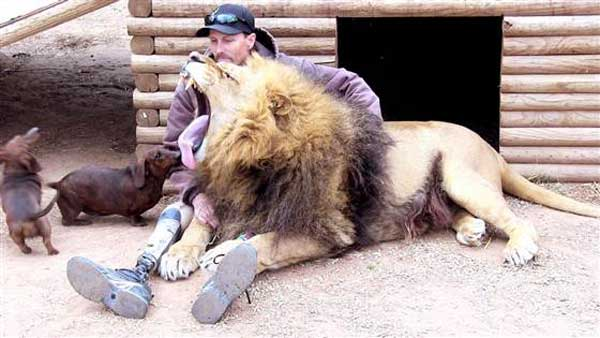 Lion and dog befriends human with one leg