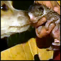 Dog Saves 4 Newborn Kittens from a House Fire