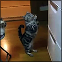 Clever Cat Prays for Someone to Open the Refrigerator