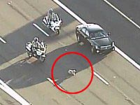 Police Officers Rescue a Runaway Puppy on a Busy Highway