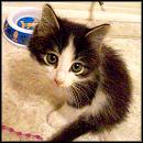 Meet the Inspiring and Adorable Two Legged Kitten