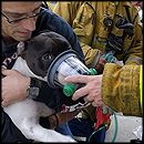 How Firefighters Saved the Lives of 2 Pets