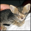 The Rescue of a Blind Kitten That was Crying for Help
