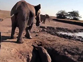 The Rescue of a Lifetime in an African Desert - a Must See!