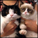 2 Grumpy Cats That Took the Internet by Storm