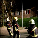 Firefighters Pulling Down a Tree Get the Most Unexpected Helper