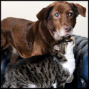 Stray Cat Becomes the Best Friend of a Blind Dog