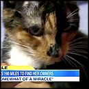 Cat Miraculously Travels 200 Miles to Reunite With Her Family