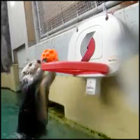 Elderly Sea Otter Does The Cutest Thing to Help His Arthritis