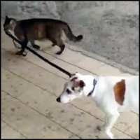 Cat Takes a Dog for a Walk... and Brings Him Back Home