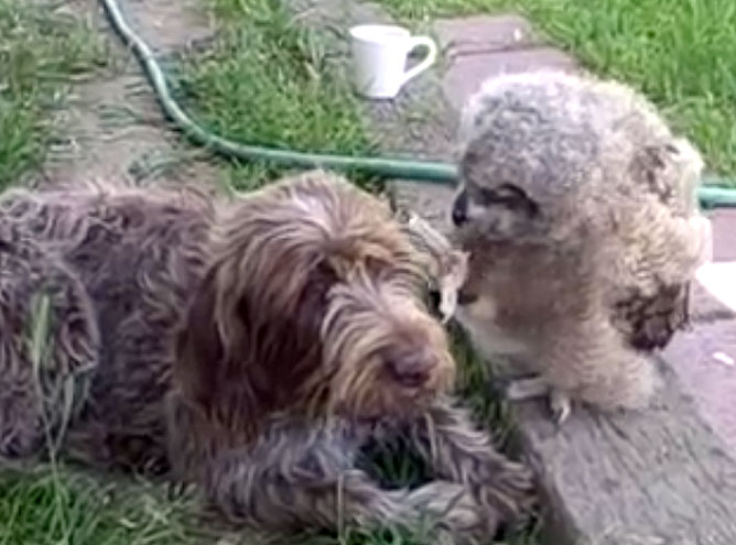 A Sweet Owl Watches Over a Doggie Best Friend While He Sleeps