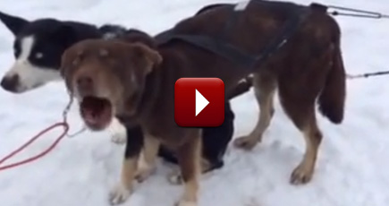 funny dog sounds like he s saying blah blah blah