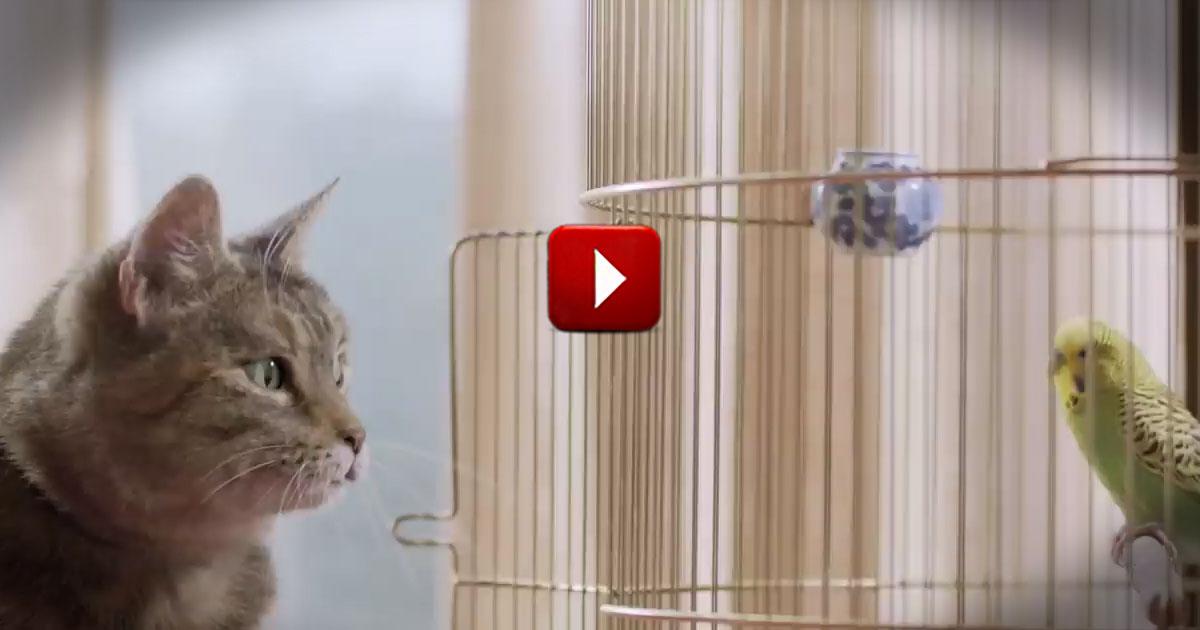 bird video: