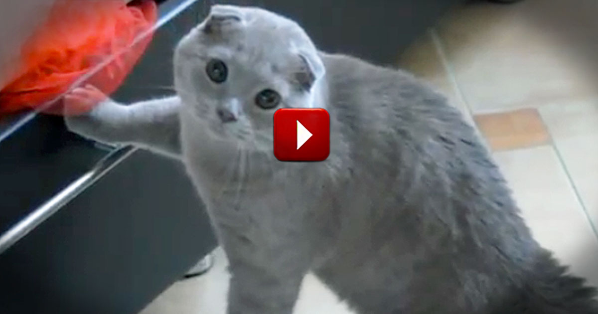Extremely Guilty Kitty Gets Caught Snooping... and Has the Funniest Reaction!
