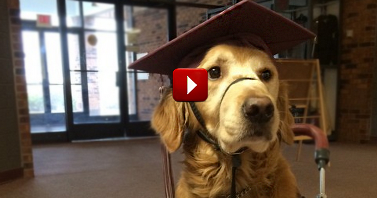 Service Dog Cap And Gown