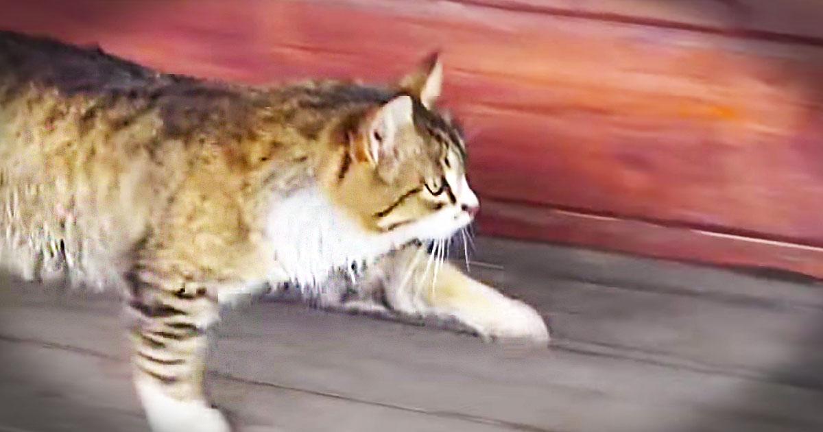 Cat S Catwalk Animals Video