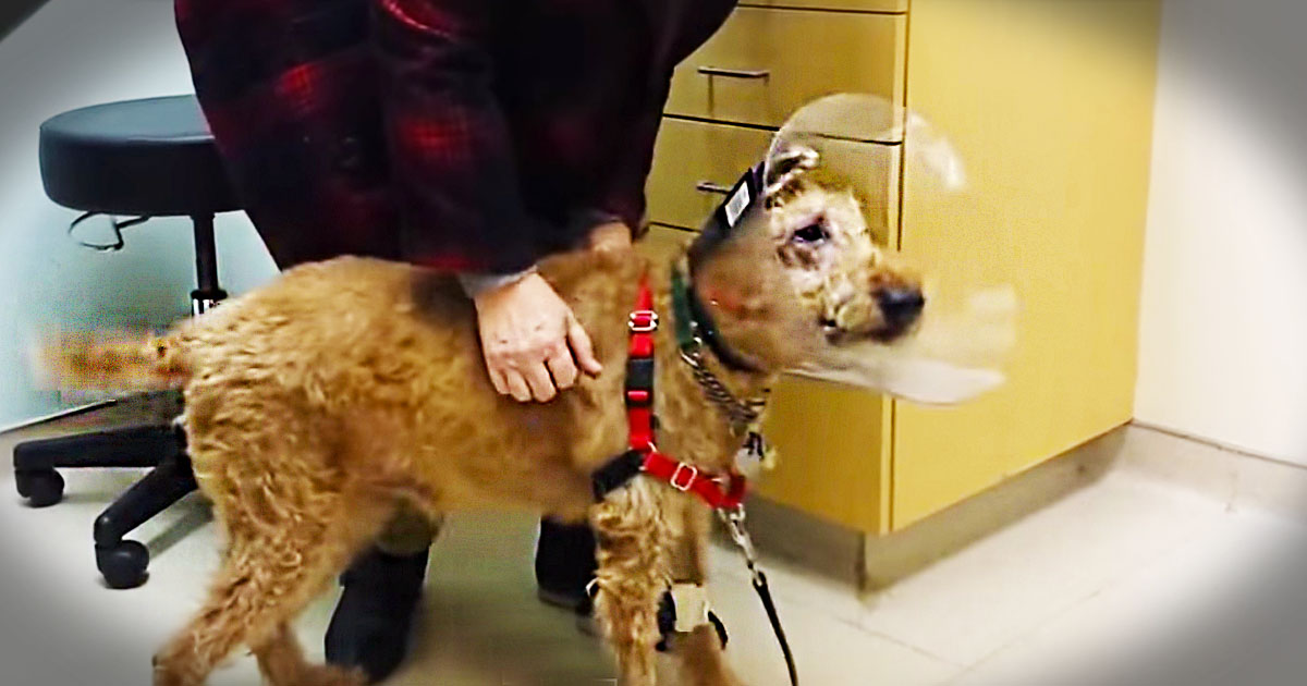 After A Grueling Surgery, This Rescue Pup Can Now See His Family For The First Time. Oh My Heart!