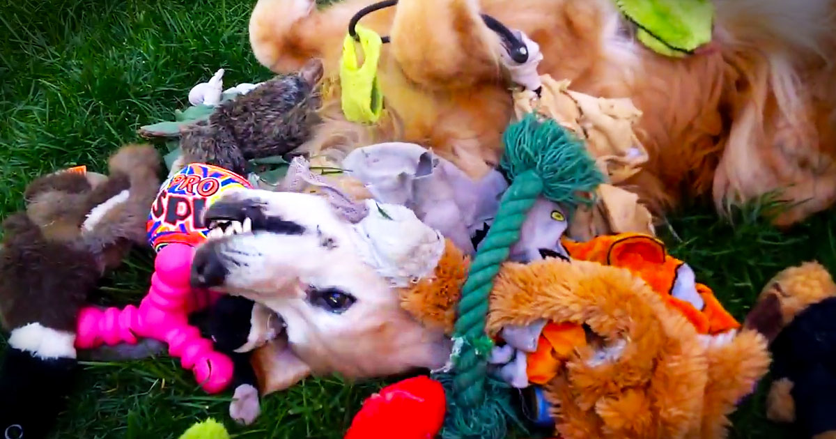I Just Want To Squeal When I See This Happy Pup. I Bet This Is Her Version of Puppy Heaven! LOL