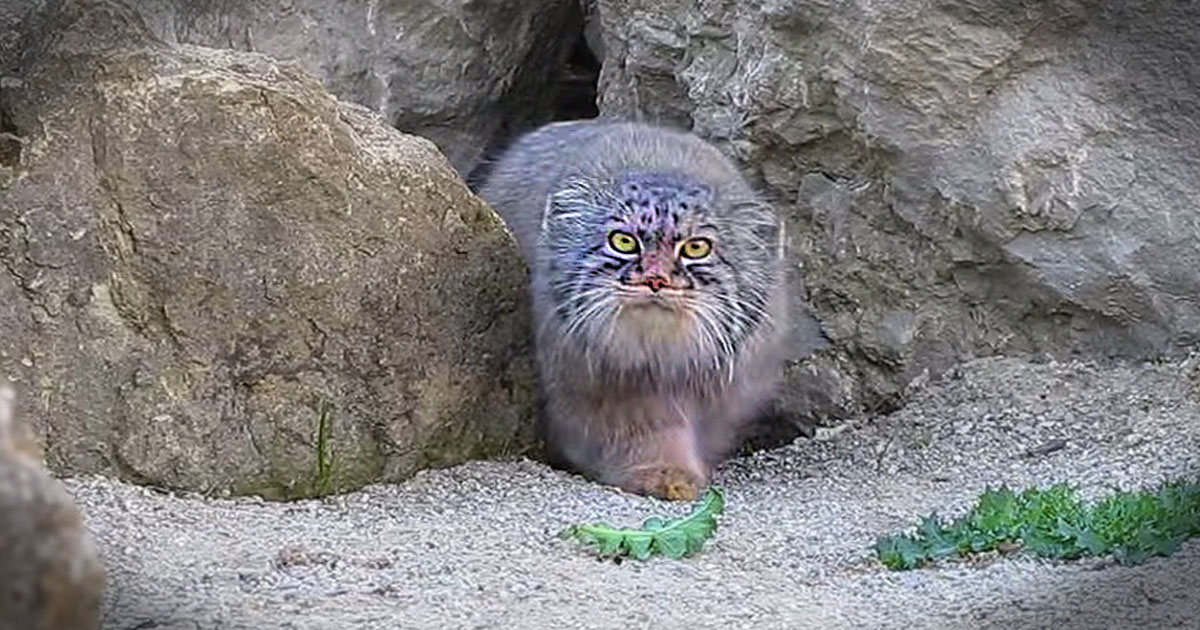 This Kitty Just Spied Something Unusual. And What He Does Next Completely Cracked Me Up!
