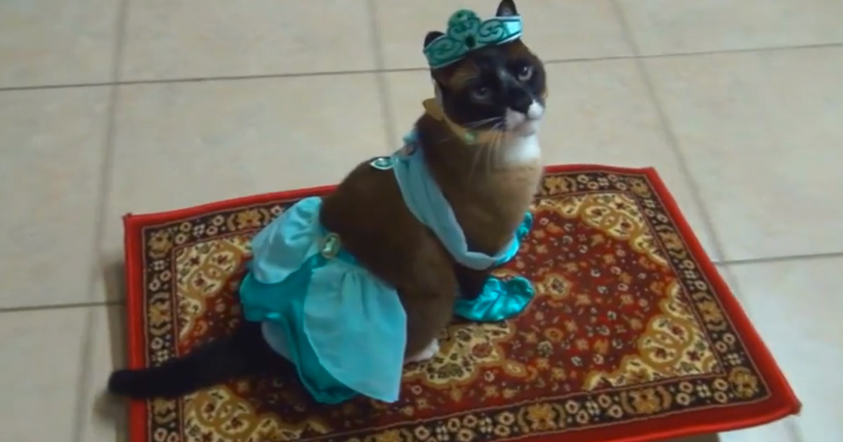 Apparently This Kitty Loves To Play Dress Up Watching