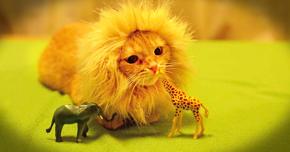 子猫 威嚇 ライオン