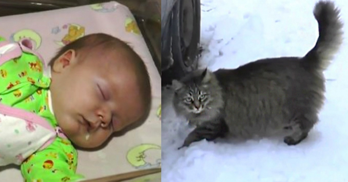 Masha the cat saves a baby in russia