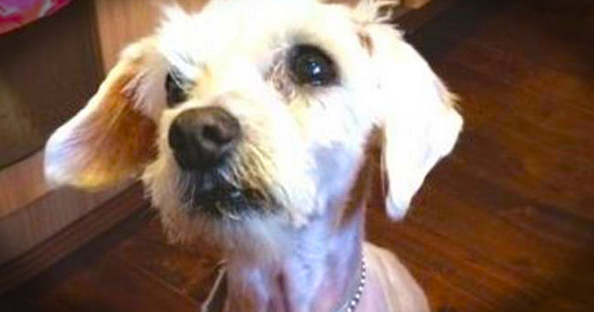 A Shelter's Heartbreaking Letter To The Soldier Who Had To Give Up His Deceased Mom's Dog.