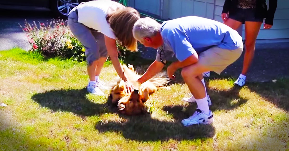 Dog Adorably Welcomes Her Parents Home
