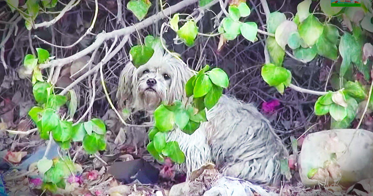 Toto Is So Fearful Until Amazing Rescue!