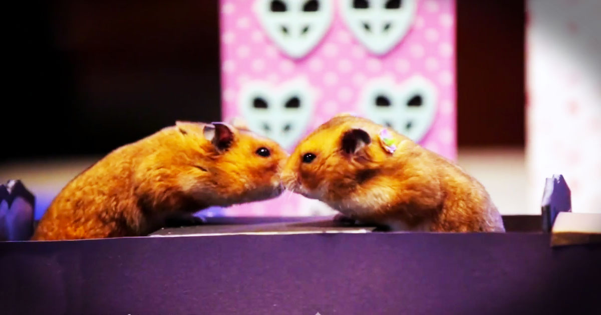 dating hamsters (hamsters, however, might be a different story) dogs are as such, if you date a guy with a dog, chances are good he'll actually, y'know, set plans in stone with you so you know he's not blowing you off he's not he just needs to make dates so he knows when to plan walks and dog park time that's right:.