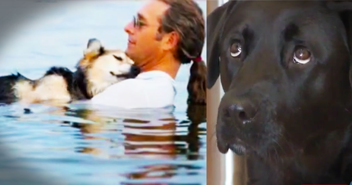 Man Finds New Pup After Faithful Friend Tragically Passed