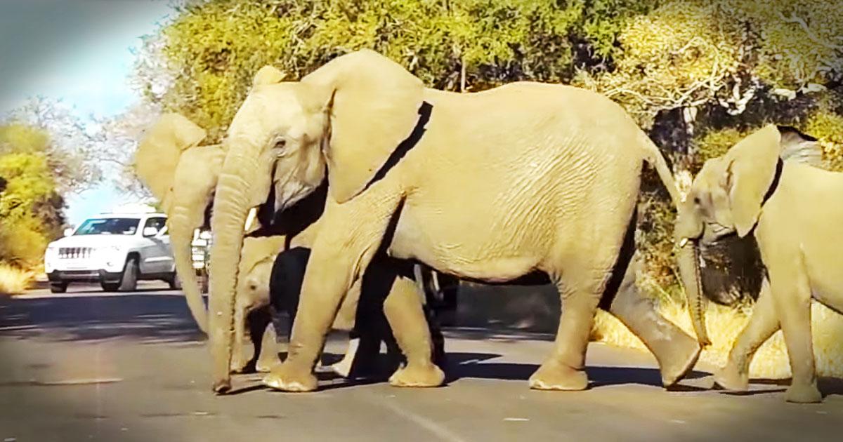 how to help protect elephants