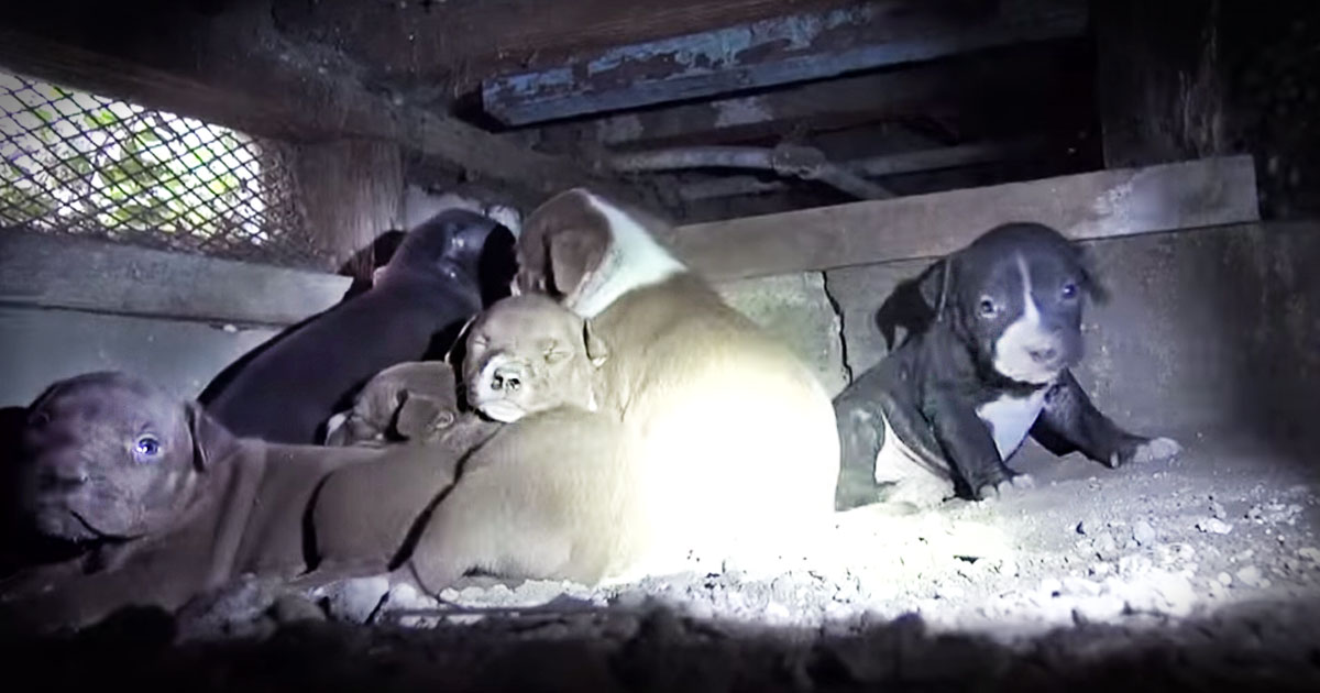What Was Hiding Under This House Will Melt Your Heart!