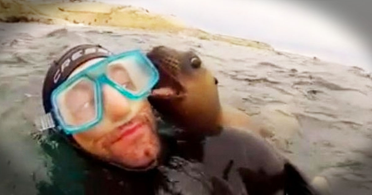 Precious Sea Lion Pups Just Want To Play. And Trust Me You Want To See It!