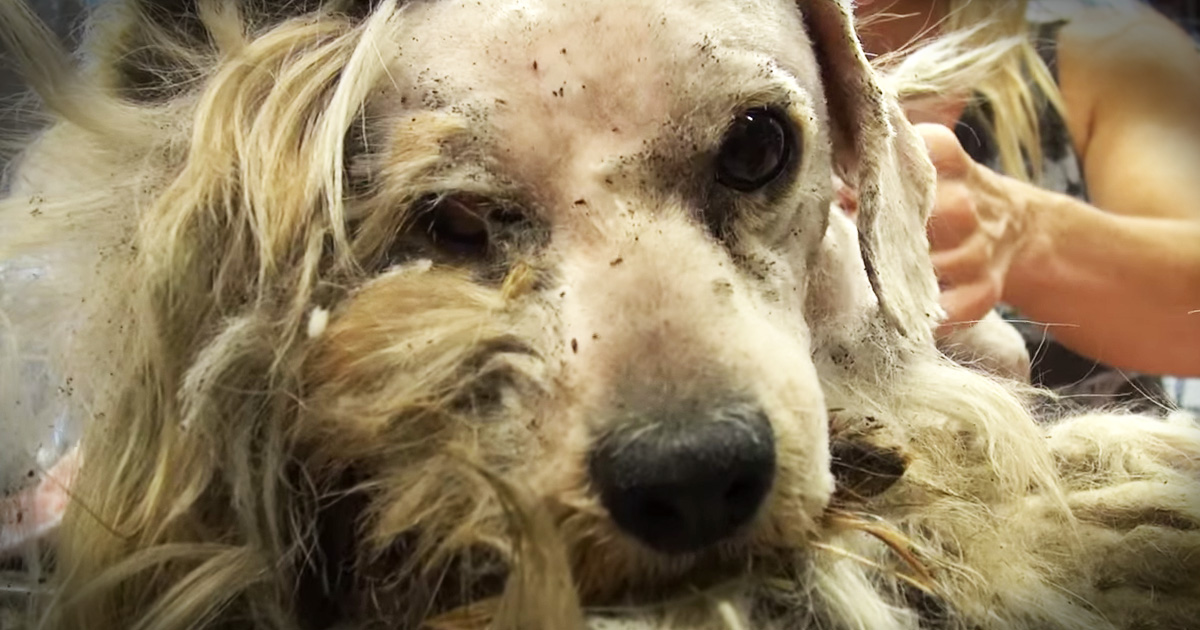 Faith S Hope Dog Rescue