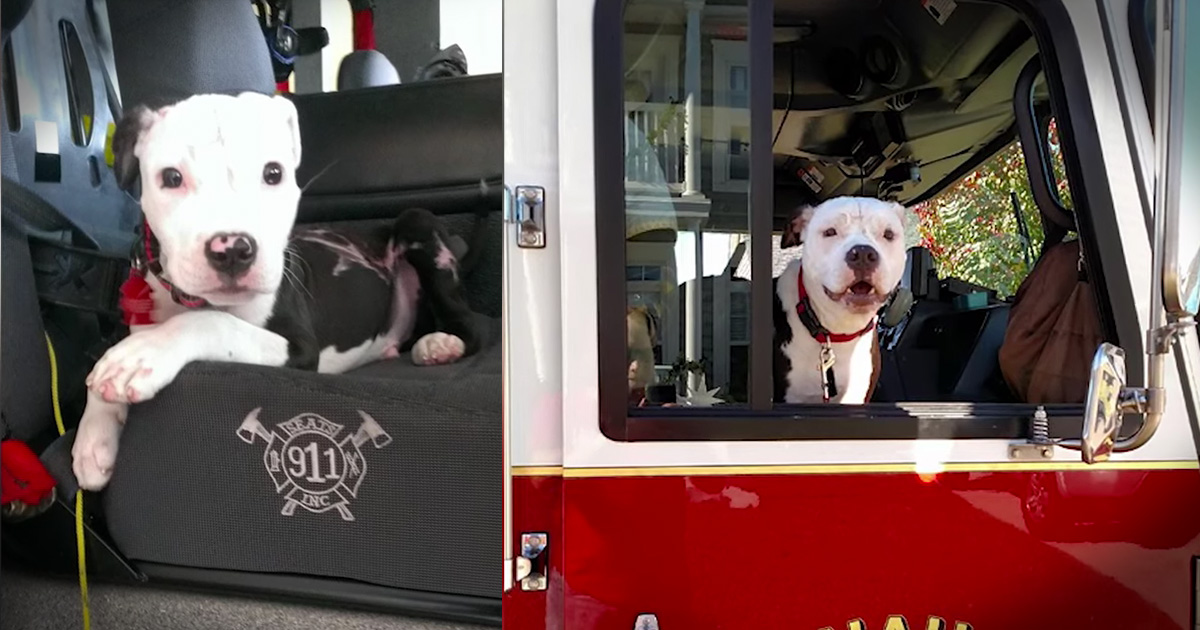 He Saved A Tiny Puppy From A Fire. And Now This Dog IS Helping Fight Fires Too!