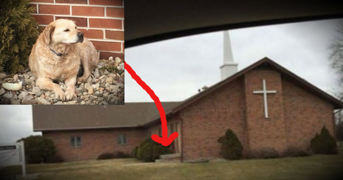 An Abandoned Dog Left Outside Of A Church Finally Has A Forever Home